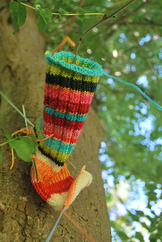 sock in a tree