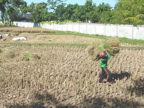 Lombok-Mataram (102)