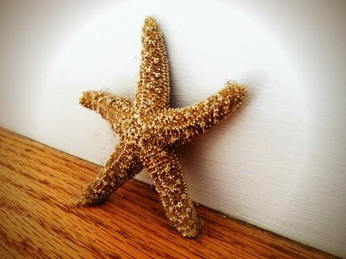 [190/365] Starfish by goaliej54