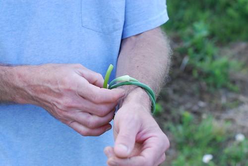 garlic scape bracelets