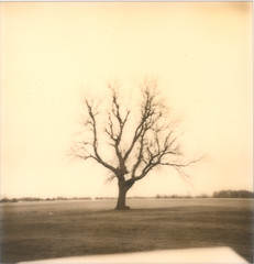 Polaroid_41 (Jeremy Stockwell) Tags: tree film alexandria analog polaroid indiana scan instant lonelytree solitarytree instantfilm onestep600 jeremystockwellpix roidweek alexandriaindiana px600 roidweek2011 polaroidweek2011