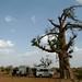 Na sombra de uma baobab
