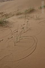 circles made bu wind and grass (Mohsin A. Soomro) Tags: china desert inner mongolia jaran badain