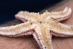 "NHME - sea star upside down • <a style=""font-size:0.8em;"" href=""http://www.flickr.com/photos/30765416@N06/5941838362/"" target=""_blank"">View on Flickr</a>"