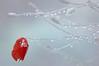 Coquelicot d' Hiver (Cool Zoom) Tags: jardin pluie manipulation coquelicot poésie emiliesimon végétaux 35faves eirela coolzoom sérieunjardinsouslapluie