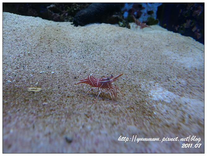 110711小丑魚主題館 (11)