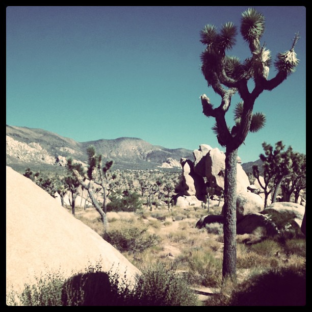 Hidden Valley, Joshua Tree National Park