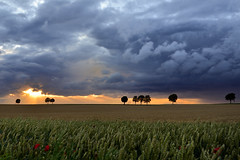 Roman road - chausse romaine (pierre hanquin) Tags: trees light sunset sky cloud sun color tree nature colors clouds landscape geotagged nikon europa europe day colours belgium belgique cloudy pierre arbres paysage landschaft arbre lige wallonie 1685 hannut d7000 1685mmf3556gvr regionwide magicunicornverybest magicunicornmasterpiece mygearandme mygearandmepremium mygearandmebronze mygearandmesilver mygearandmegold mygearandmeplatinum hanquin masterclasselite