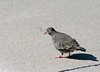Day 202