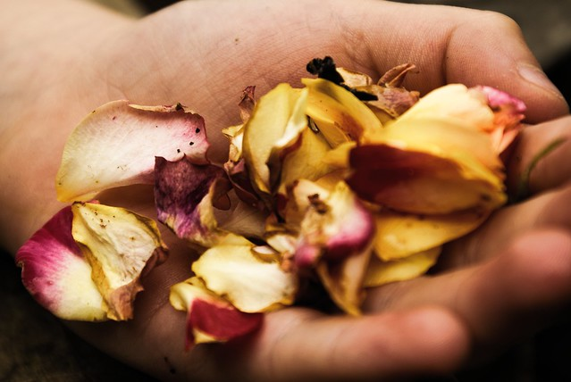rose petals in Tilly's hand