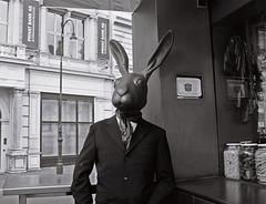 march hare in vienna (Frau Luna) Tags: vienna wien blackandwhite bw film monochrome analog nikonf65 thelittledoglaughed