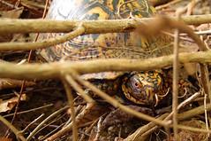 Sullen Turtle