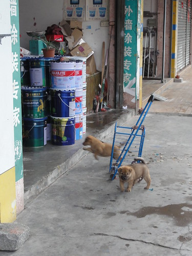 Puppies playing in front of a store