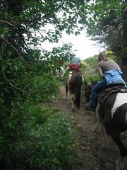 2011 Wyoming 096 (wanita niehaus) Tags: horsebackriding colterbay jacksonlake twooceans 2011wyoming