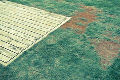 rooftop (Froschmann : ) Tags: wood green rooftop grass japan geotagged tokyo university ikebukuro    lightroom rikkyo   k7   sigma30mmf14exdc rawdevelopment  raw geo:lat=35731258 geo:lon=139703698