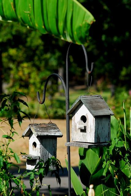 Bird cabins