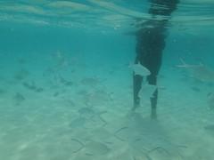 (UmmAbdrahmaan @AllahuYasser!) Tags: vacation fish fun malaysia snorkelling pulau corals terengganu 991 pelangi redangisland kualaterengganu 3d2n malauysia july2011 ummabdrahmaan