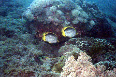 体験ダイビング 2ダイブ(バリ島東部)