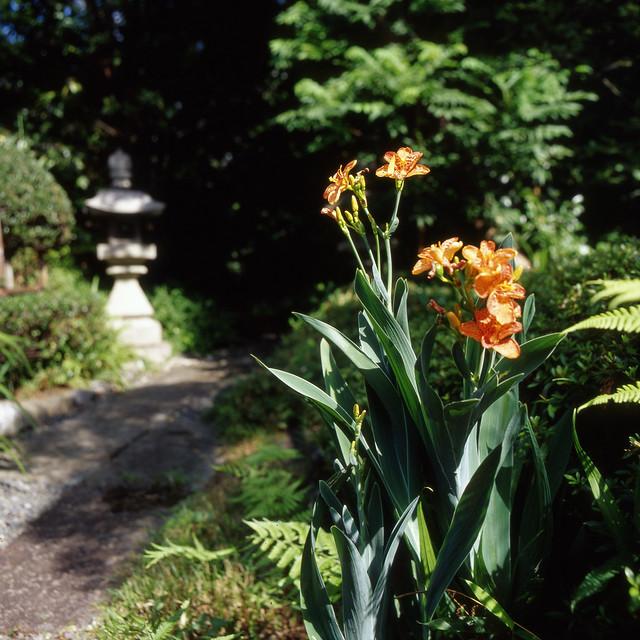 夏日和の小道