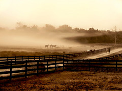 Fog cloud on horse farm (heysues23) Tags: road ranch old blackandwhite horse cloud mist tree art field grass weather misty hammer fog sepia barn fence print landscape outdoors photography photo cowboy estate image cloudy photos path farm labor wheat board nail farming rustic fine foggy seed straw images dirt pony photographs pasture photograph crop plantation round land prints fencing homestead aged hay cowgirl rider range equestrian pathway stallion gravel acre graze dense farmstead cultivate