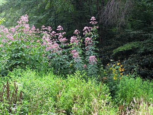Fwd: international health & wealth wild plants