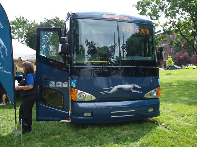 Greyhound at the Loring Park Art Fair 3