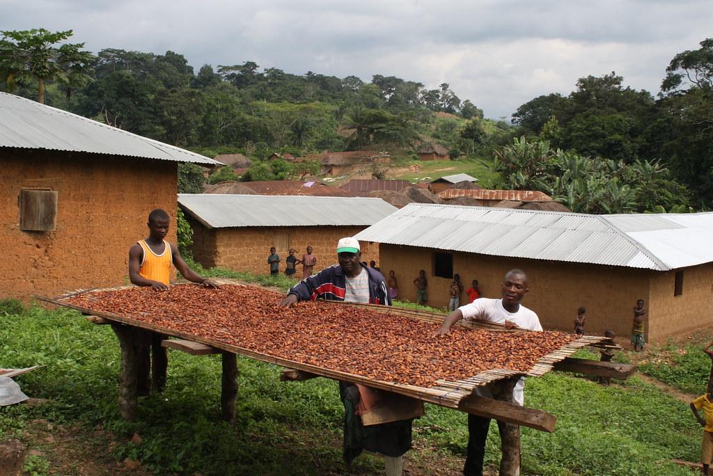 Table de séchage du cacao Togo