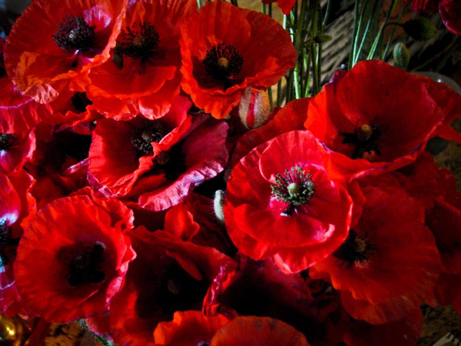 Very beautiful poppies.  IMG_1761
