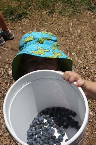 Professor Blueberries 2011