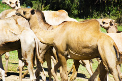 "PhotoFly Travel Club Kenya Safari 2011! • <a style=""font-size:0.8em;"" href=""https://www.flickr.com/photos/56154910@N05/5892434615/"" target=""_blank"">View on Flickr</a>"