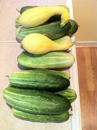 More cucumbers than i really want to eat