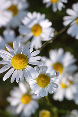 Close-ups (Bob van Ooik) Tags: macro nature sigma foveon 150mm sd1