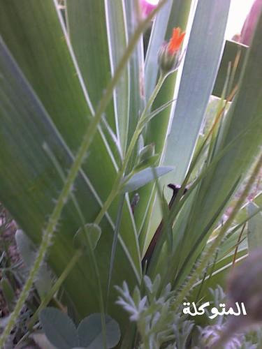 الاردن في الربيع صور 5910992793_689f601474.jpg