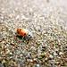 Lady Bug on Sand