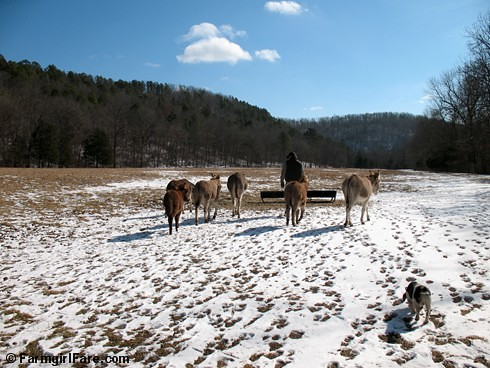 The Daily Donkey 140 - Treat time in snowy Donkeyland - FarmgirlFare.com