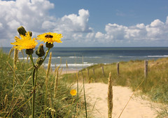 Vamos a la playa (Paul Beentjes) Tags: beach netherlands clouds strand dunes nederland wolken dandelion duinen paardenbloem noordhollandsduinreservaat northhollanddunereserve