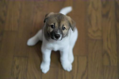 cucciolo cane cosa comprare