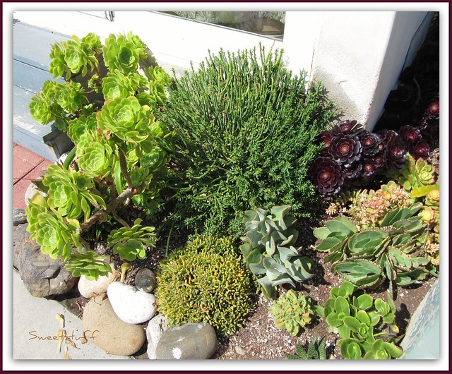 Succulents at Oceanside