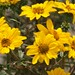 Flores das cordilheiras