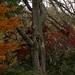 ... especialmente nesta epoca do ano, outono