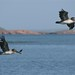 Os pelicanos nos dando boas vindas