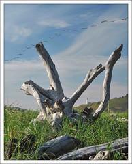 444MEP_0783 (Michael Patnode) Tags: lighthouse photoshop stump capedisappointment patnode nikond300s