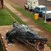 O pequeno crocodilo de só 8,63m de comprimento