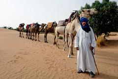 they would pray to the moon (JonBauer) Tags: africa tree scarf sand nikon hijab dromedary morocco berber walkingstick niqab merzouga saharadesert arabiancamel d700 2470mmf28g gapadventurestravel