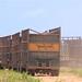 Caminhões usados para o transporte da cana