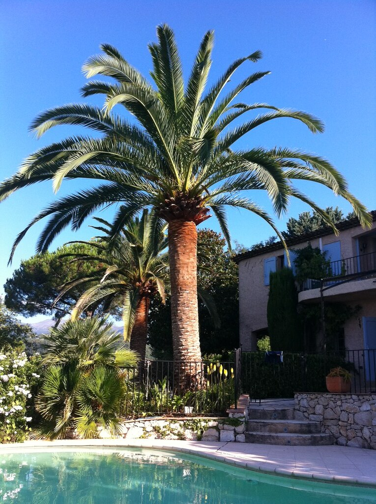 Another clear blue sky day, taken from our pool in St. Paul de Vence.