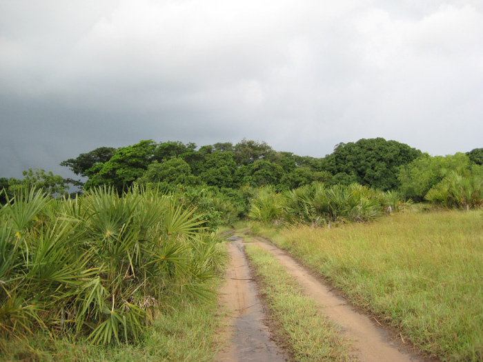 One of my favorite roads leading to the beach in Tanzania!