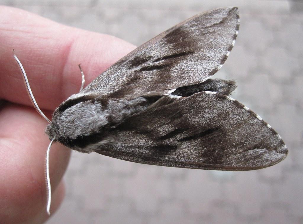 Østrig 2011055