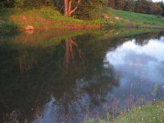 reflection on the pond at sunset
