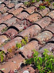On the roof (by_irma) Tags: roof france groen frankrijk saintcirqlapopie dorp dak theperfectphotographer bonvillage